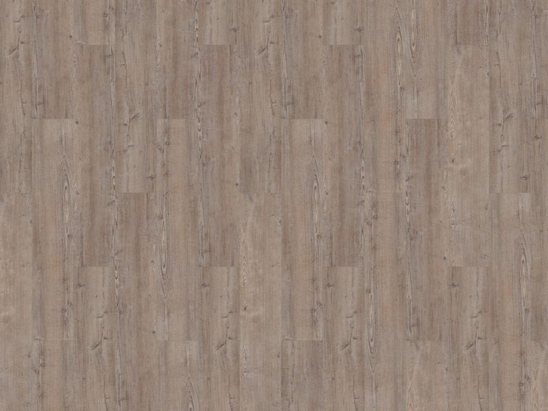 11-argyll-fir-greyfrairs-800
