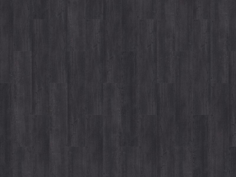 12-argyll-fir-glenmuir-800