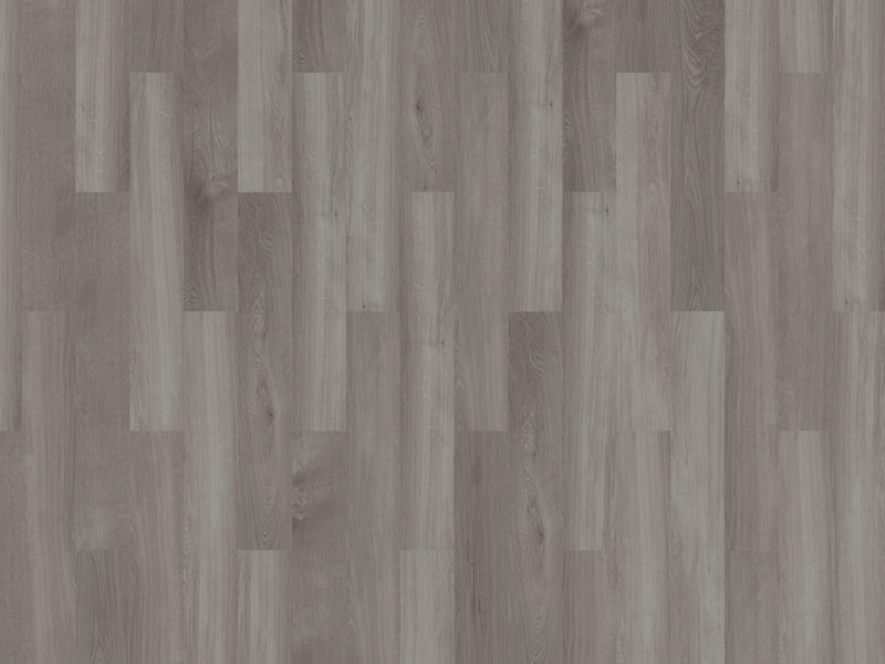 28-Broad-Leaf-grey-Syncamore-800